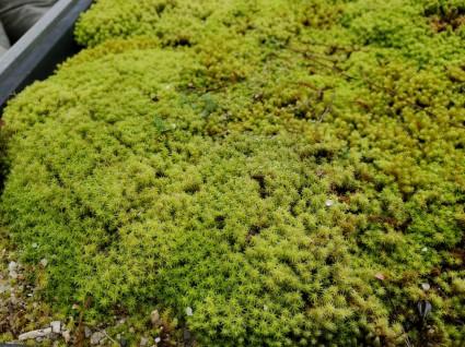 和モダン庭|スナコケ苔のお庭づくり