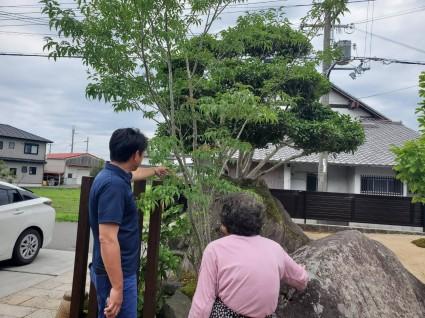 姫路庭リフォーム工事|アオダモの木