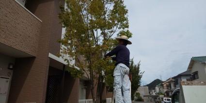 姫路市マンションの剪定作業