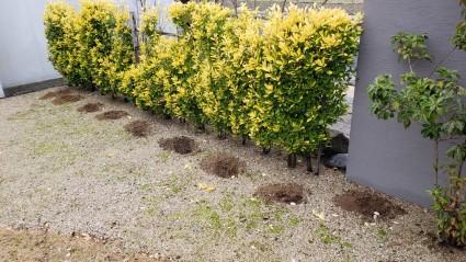 姫路市植栽工事|寒肥(かんごえ)