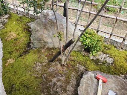 風で植木が倒れる