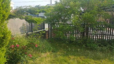 20160527_1603383-before