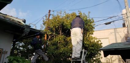 姫路市の庭木の剪定