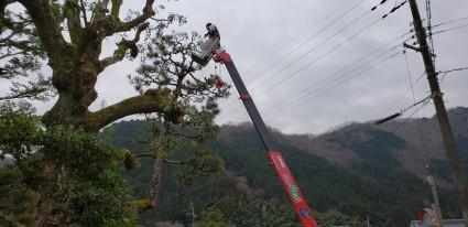 佐用町の庭木の剪定作業