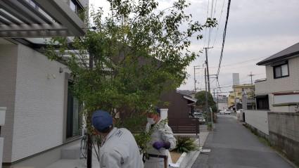 姫路市シンボルツリー植栽工事