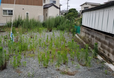 20190701_093216-before