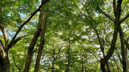 こもれびの森