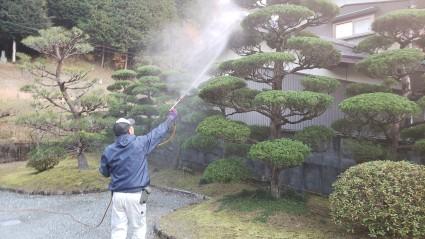 サンガーデン庭木の剪定