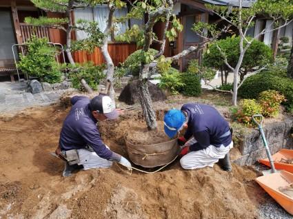 庭解体植木移植工事