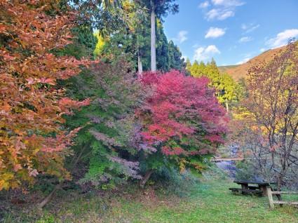 イロハモミジの紅葉