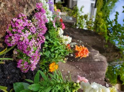 花壇の花植替え