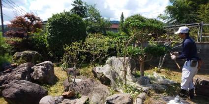 庭木の散髪・庭木の剪定