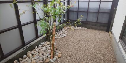 姫路和モダンの庭|イロハモミジ