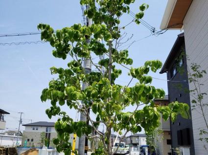 落葉樹の樹形