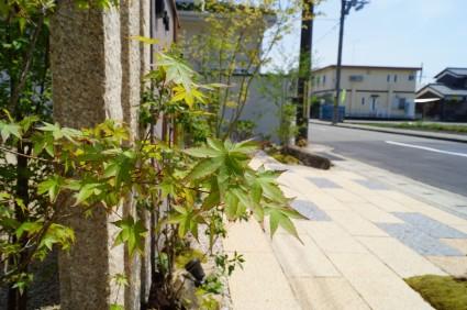 モミジのシンボルツリー