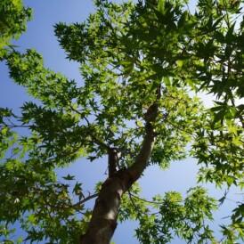 落ち着きのある雑木のお庭の植栽 姫路市S様邸